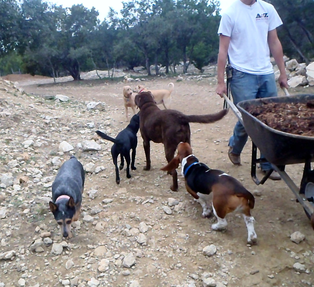 campers supervising the ranch hands