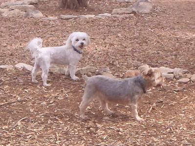 Casper and Teddy cruising the yard