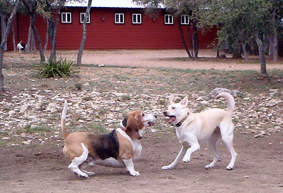 February 2013 A to Z Dog Ranch