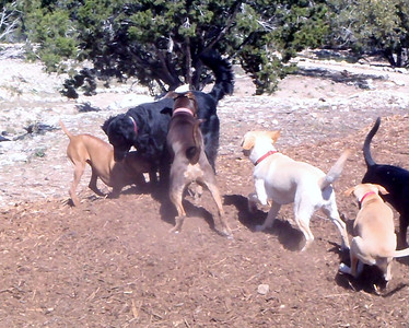 Everyone is whooping it up on the woodchip pile_Sophie C_Callie_Conan_Lexy C and Cicero