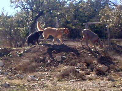 Tuco leading the exploration with Kivah and Champ not far behind