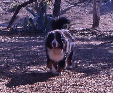 Big dog Riley!