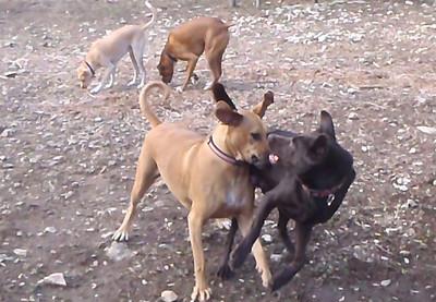 Cicero, Liela, Ruby and Rocky
