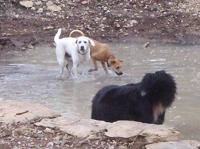 Boomer,Sophie and Riley