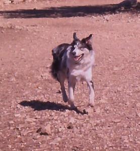 Duke running around