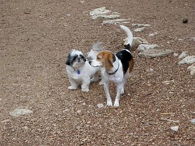Alfie and Rudi_camp buds