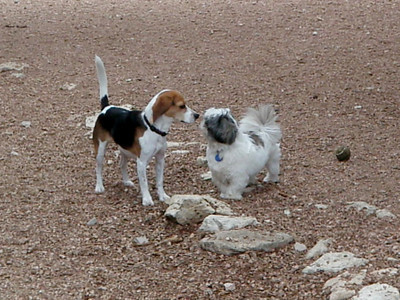 Rudi and Alfie_a match made at the Dog Ranch