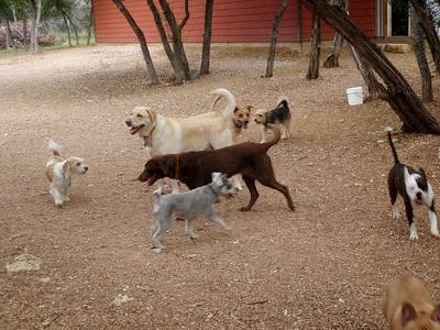 This is why there is no such thing as a bad day at the dog ranch