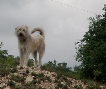 Big Dog Mikki