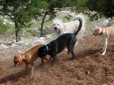 Teak, dirty fighter Sammi, Mikki and Cicero_woodchip mayhem