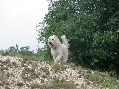 Mikki enjoying the dirt pile