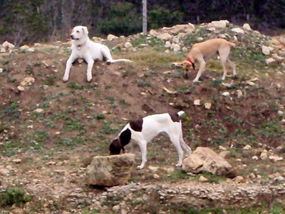 Bella R, Jenny and Cicero_checking out the dirt mound