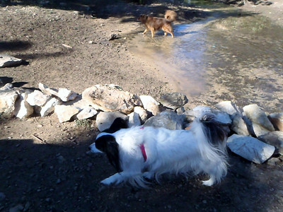 Sissy and Ginger crossing the creek