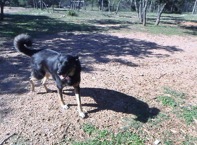 Dillon loving it at the ranch