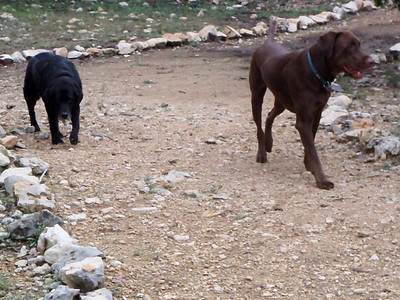 Kali and Teddy taking a walk around