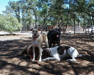 Dog pile!!_ Cicers, Spartacus, Harvey and Ellie N