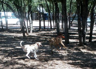Cicero and Spartacus jammin' around the yard