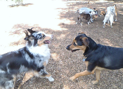 October 2013 A to Z Dog Ranch