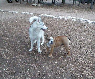 Lilly G and Big Dog Pumbaa saying good morning