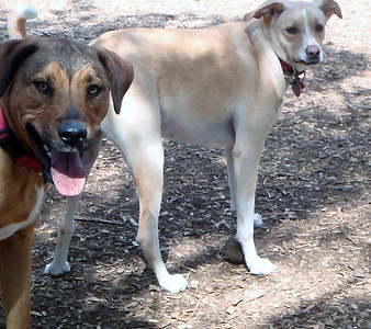 The dog ranch brothers_ Cicero and Spartacus