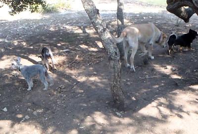 enjoying the shade_Bongo, Gypsy, Daisy B and Gunner A