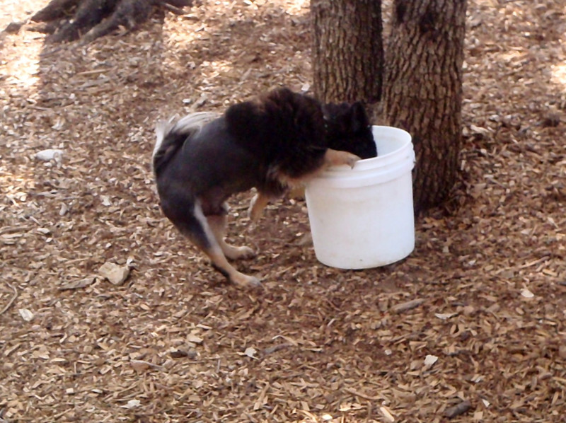 Big Dogs use these buckets_GUNNER A