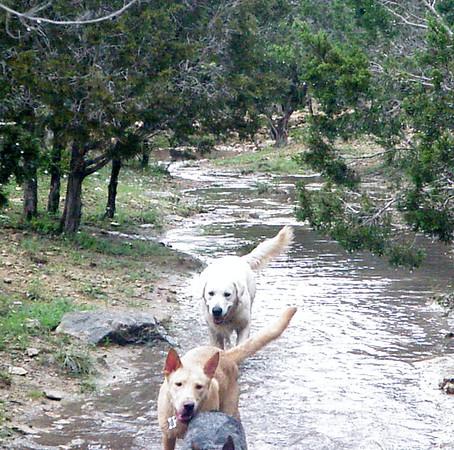 April 2012 A to Z Dog Ranch