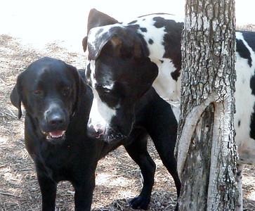 Buds Blackjack and Leo