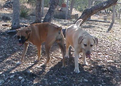 Sage & Leila