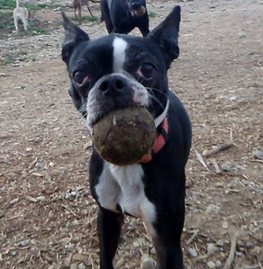Lexi and her ball