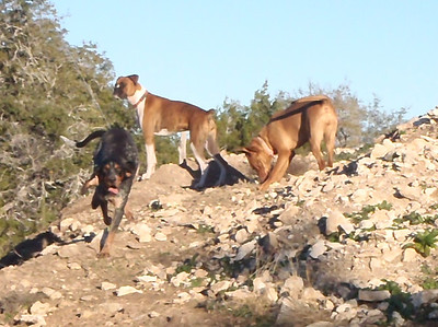 Mountain hounds