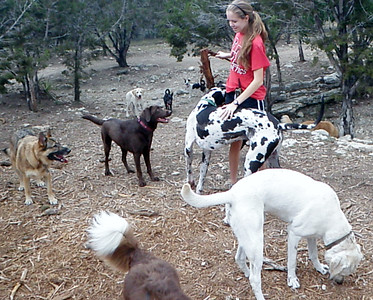 Louisa has Leo's stick while everyone watches_Zella, Coco, Mia, Blue, Marble  Toby wants his own