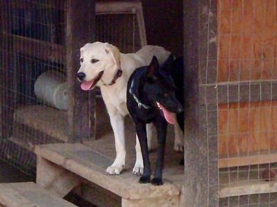 Mia and Dakota - fast friends