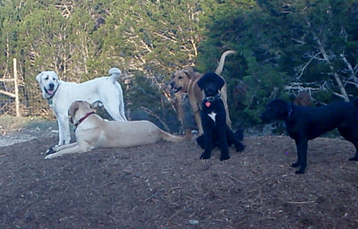 Levi, Duke, Bob, Roxy and Zoey_ watching everyone from the woodchip pile