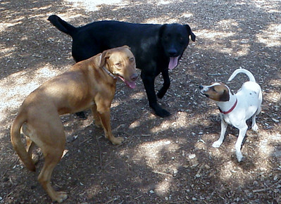 Charlee, Marshall and Big Dog Abby