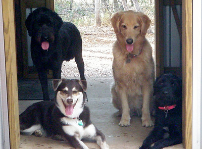 Calvin, Izzy, Whiskey and Ellie kickin it on the Bunk House porch