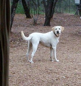 Murphy   one proud pup