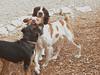 Cleo, Jasper and Bo