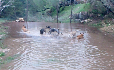Hounds loving the creek
