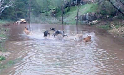 Hounds loving the creek