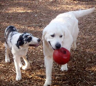 Duke and Skipper   looks like Duke wants the ball, good luck kid