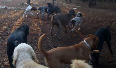 Harvey, Buster, Hattie, Sasha, Spot, Leo, Chase, Ruby and Elvis   everybody is so busy