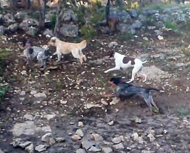 Buster, Charlie, Harvey and Hattie in flight, again