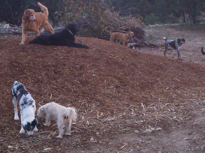 Duke, Lola, Captain, Bess, Ruby and Buster    chillin on the chips