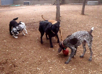 Roxy and Duke are paired along with Ruby and Bess    Buster is happy with his ball no one wants