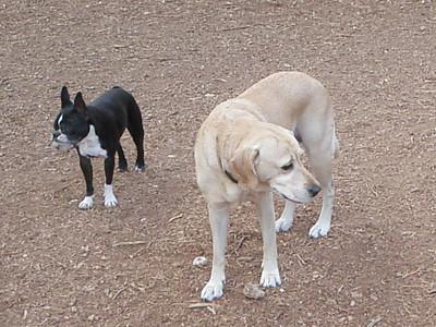 Ladies Lexi and Yoko