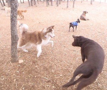 Parker thinks he is so smooth while Foxie is ready to run