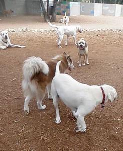 Toby, Foxie, Drew, Walter, Louie_kickin it in the yard