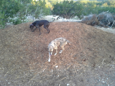 Maddie and Mama playing on the woodchip pile