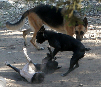 Pele and Malu having a wrestling match with Roxy watching for any dirty fighting